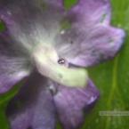 img_0107b1k_paulienvanderbel_macro_bloem