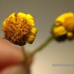 img_0233bk_paulienvanderbel_macro_bloem