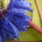 img_0296bk_paulienvanderbel_macro_bloem