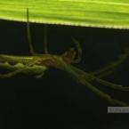 img_6509bk_paulienvanderbel_macro_insect